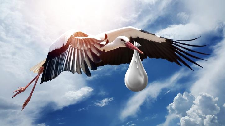 bird-3058712_1920